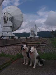 野辺山宇宙太陽電波観測所!(スゲー)