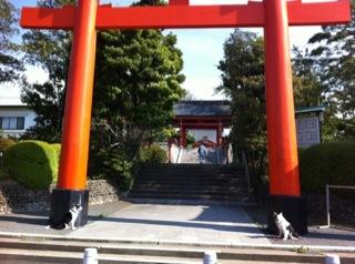 また京都に来ています(嘘☆)