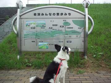 iwabuchi_guide.jpg